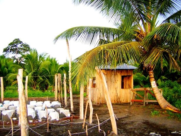 Freiwilligencamp Costa Rica (C) Anja Knorr