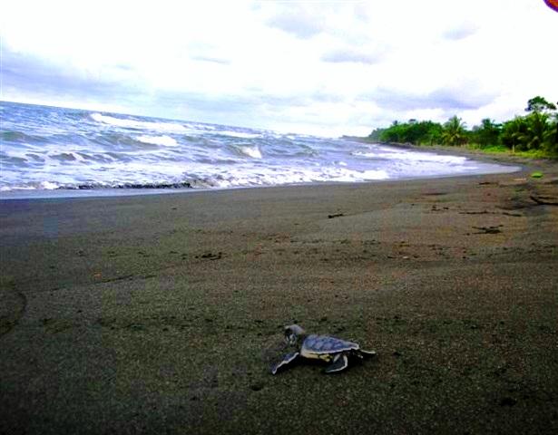 Freiwilligendienst Schildkröten (c) Anja Knorr