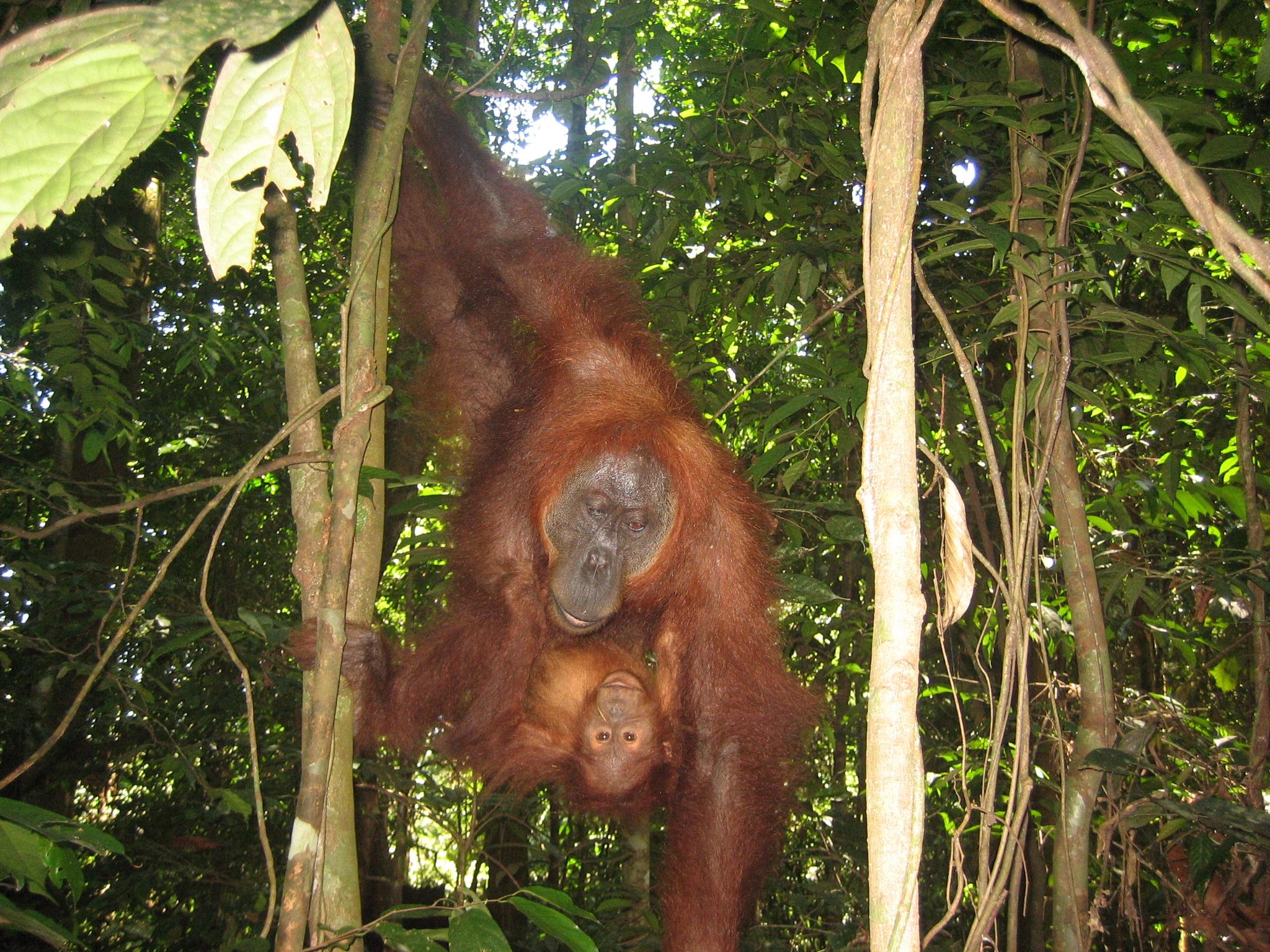 Bukit Lawang Indonesien (c) Anja Knorr