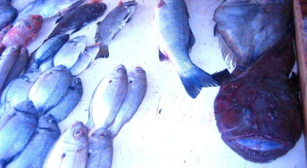 Fischmarkt (c) Anja Knorr