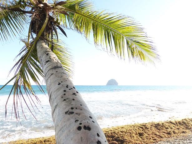 Palme Strand Urlaub (c) Anja Knorr