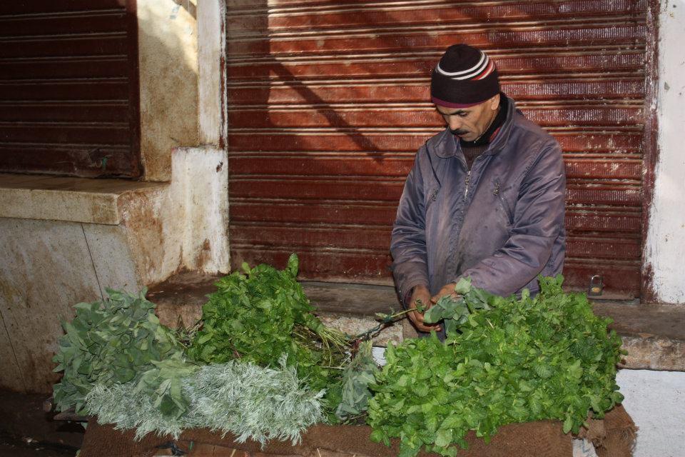 Pfefferminze Marokko (c) Anja Knorr