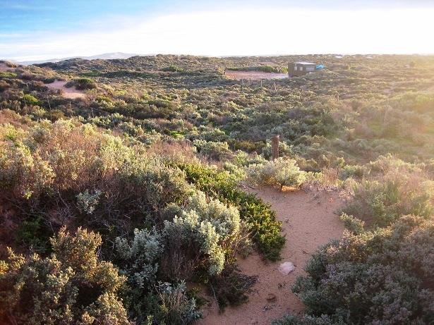 Catus Point Australien Buschland (c) Anja Knorr