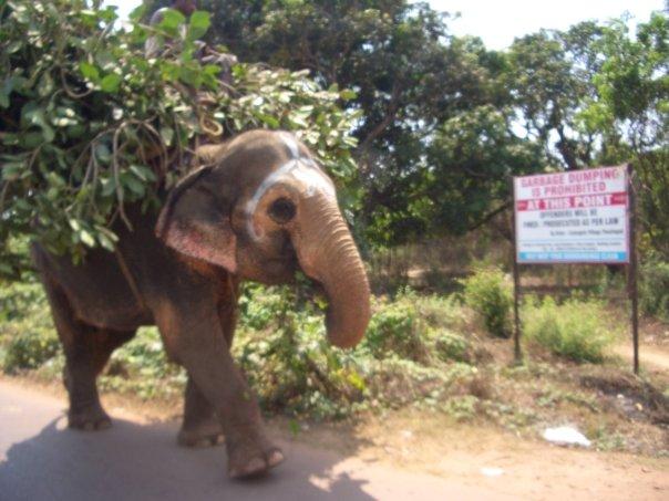 Indien Elefant (c) Anja Knorr