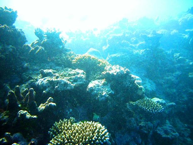 Korallenriff Australien (c) Anja Knorr