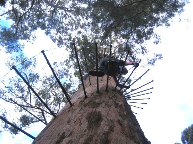 Karribaum-Australien-c-Anja-Knorr