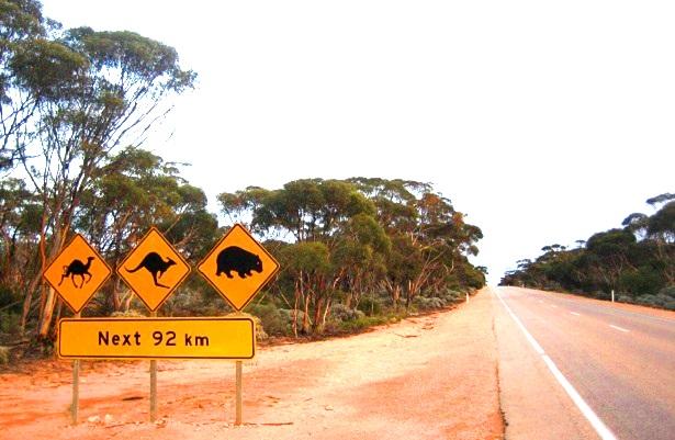Nullarbor Plain Australien-c-Anja-Knorr
