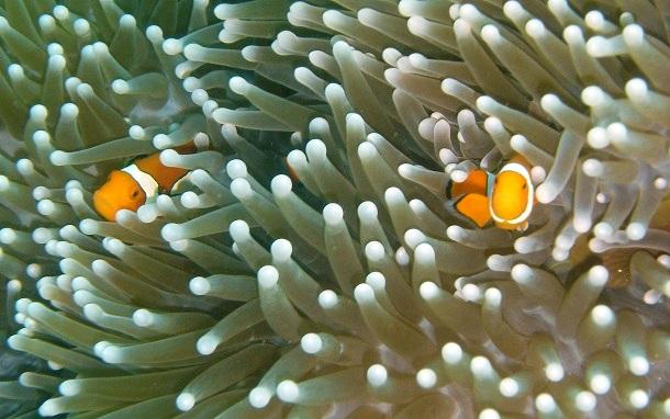 Korallenriff-Great-Barrier-Reef-c-Anja-Knorr
