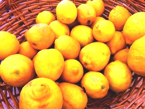 Zitronen (C) Anja Knorr