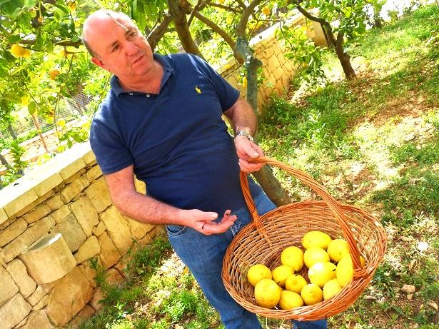 Zitronen Garten Malta (C) Anja Knorr