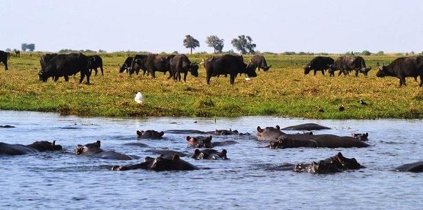 Afrika Steppe Tiere (c)  Jana Lindner