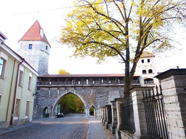 Hellemann-Turm Stadtmauer Tallinn (c) Anja Knorr