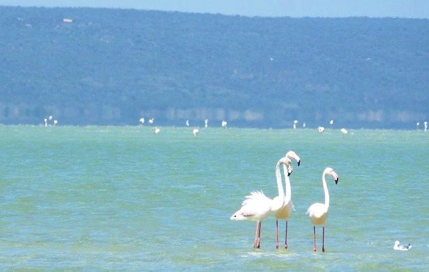 Flamingos Südafrika (c) Anja Knorr