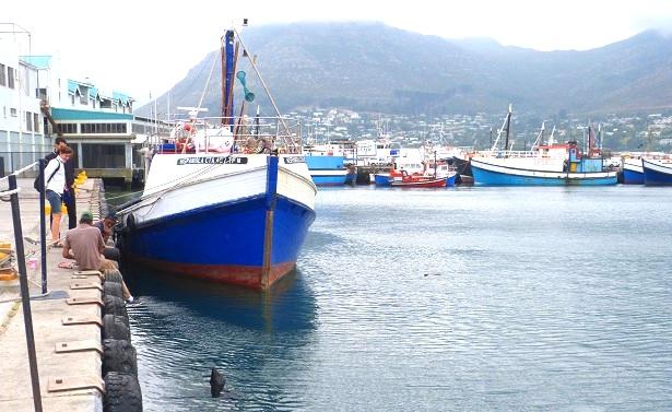 Hout Bay Südafrika (c) Anja Knorr