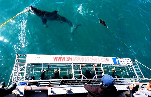 Haikäfig Südafrika (c) Anja Knorr