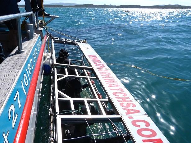 Haikäfig Shark Alley Südafrika (c) Anja Knorr